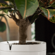 Smart flower pot at ces 2015