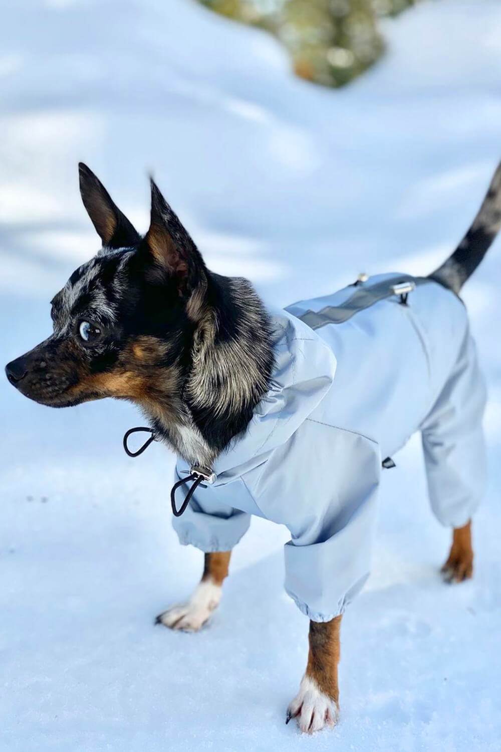 Pet styles and accessories