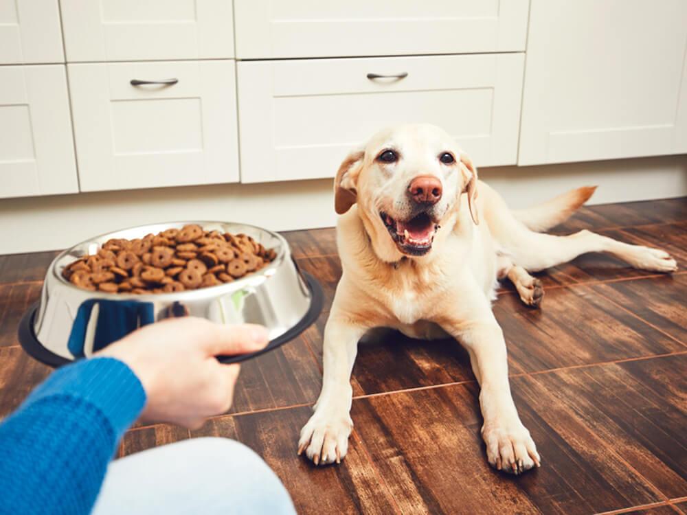 Pet food monitoring