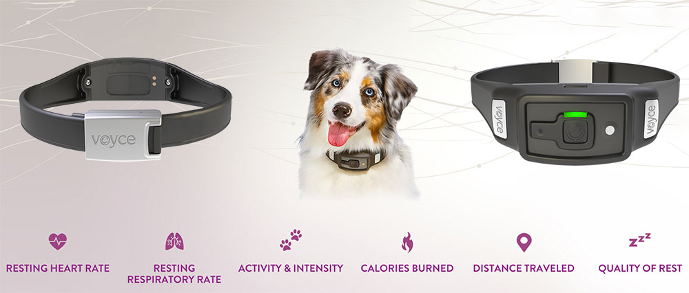 pet styles, is a new trend in fashion tech for pets dog with life monitoring collar