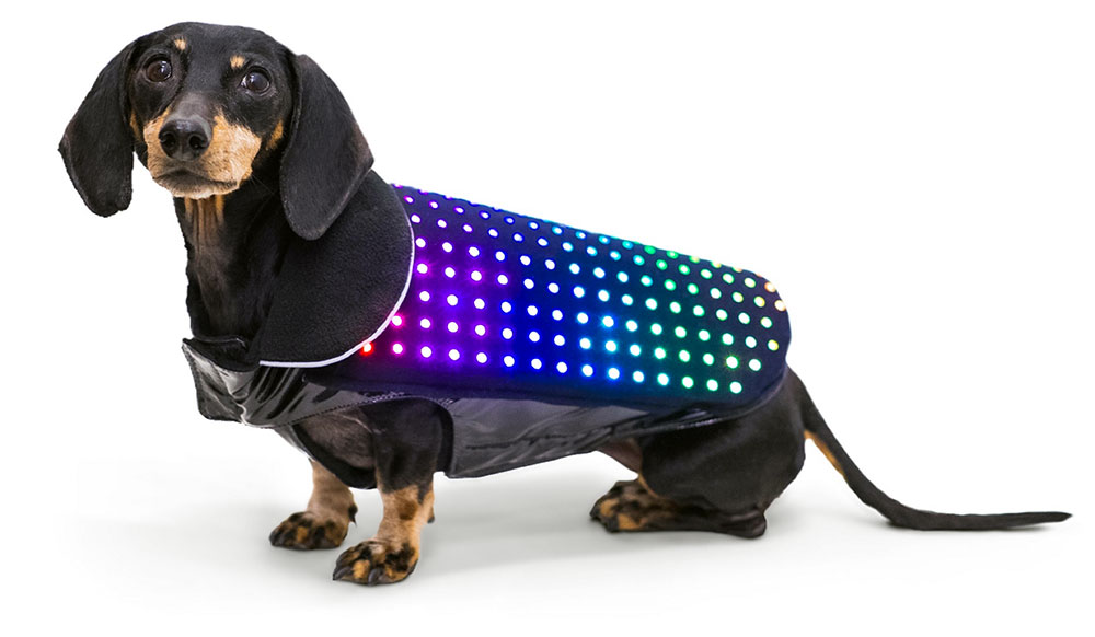 pet styles, is a new trend in fashion tech for pets