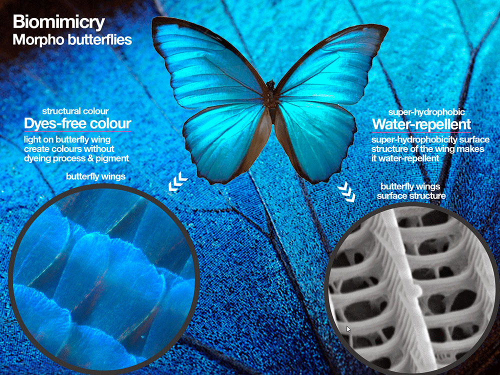 Fashion Biomimicry - blue butterfly wings as inspiration for fashion apparel