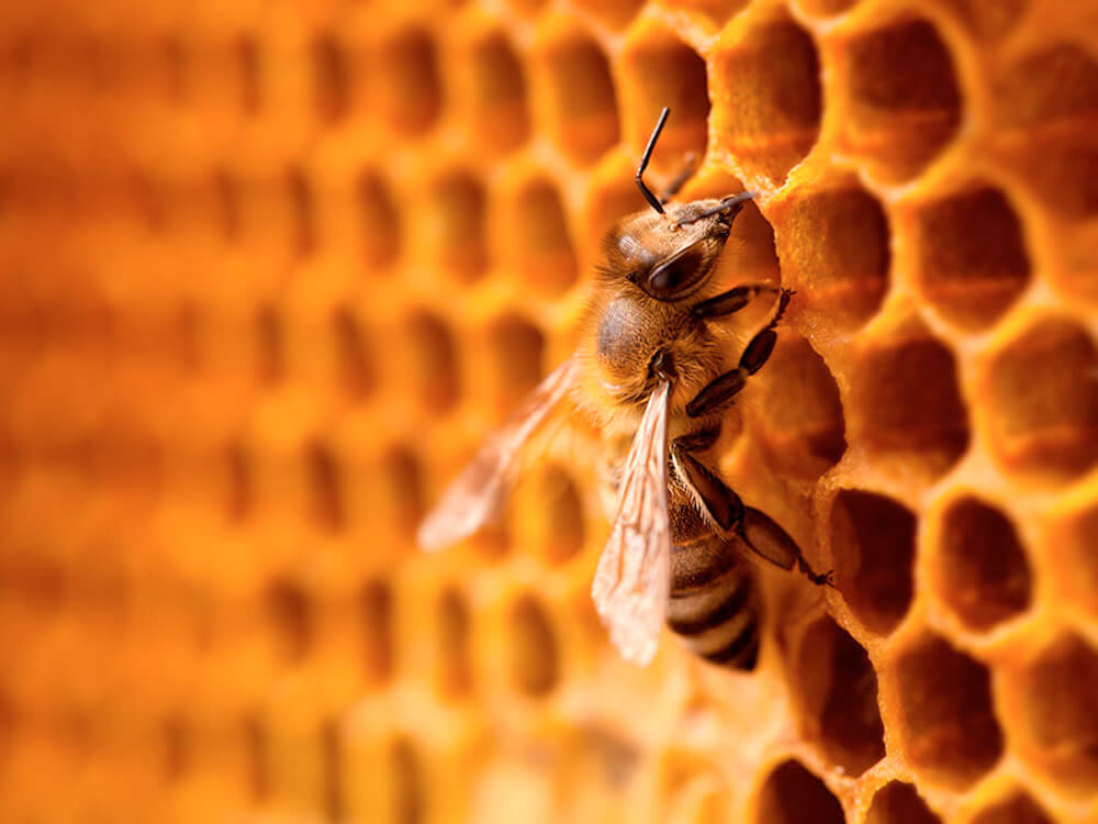 bee on a honeycomb - Conscious Fashion Gains Traction Despite Long Road Ahead
