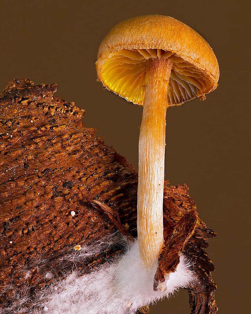 Mycelium part of fungi