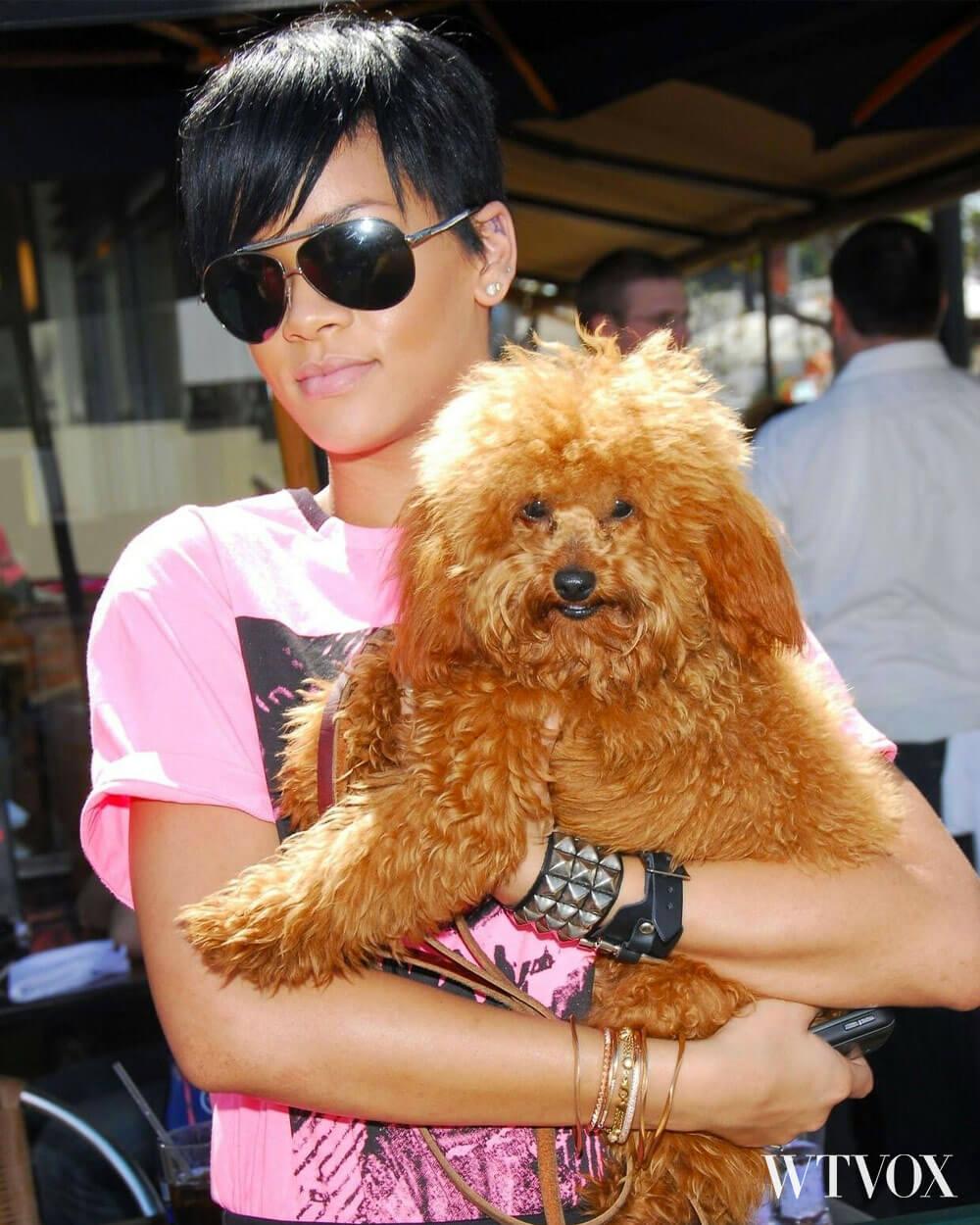 Rihanna with her poppy dog, Oliver