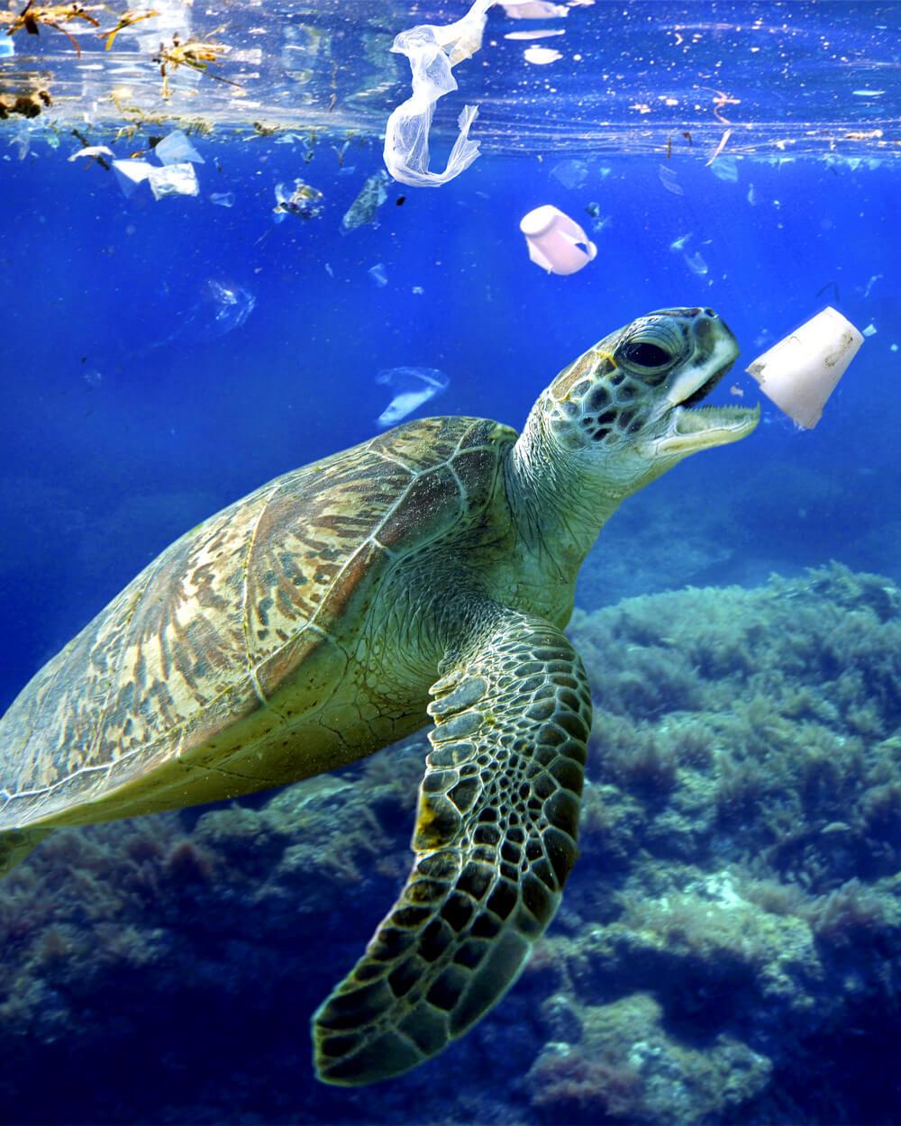 plastic waste in ocean