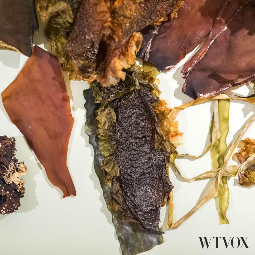 kelp leather clothing